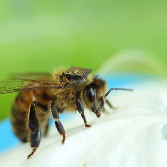 http://www.allergymedik.com/wp-content/uploads/2015/11/honey-bees--540x540.jpg